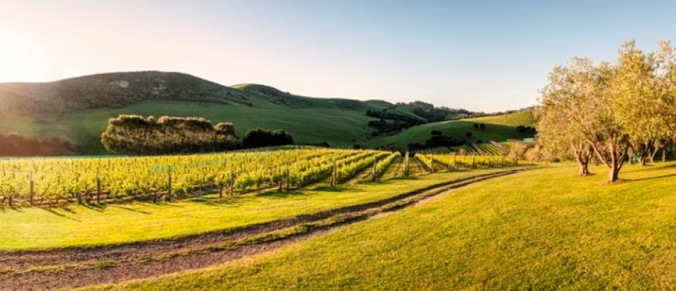 Stonyridge Vineyard | Logo | Waiheke.co.nz